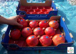 بسته بندی میوه انار، شرکت انار صاحبی +تصاویر