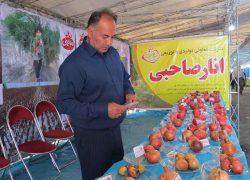حاشیه جشنواره انار اشرف + عکس