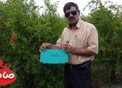 نصب تله فرمونی جهت رصد و کنترل پیک پرواز پروانه کرم گلو گاه در باغ انار – گنبد کاووس باغ شخصی دکتر میرزنده دل