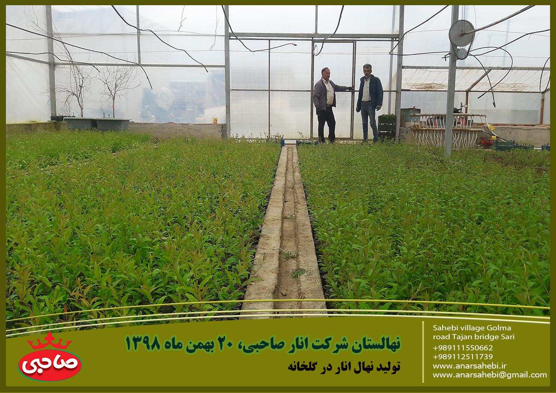 نهالستان شرکت انار صاحبی، 20 بهمن ماه 1398